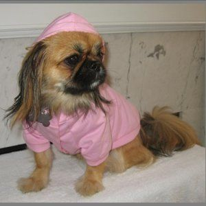 Bow Wow Pet Hoodie - Dog not Included